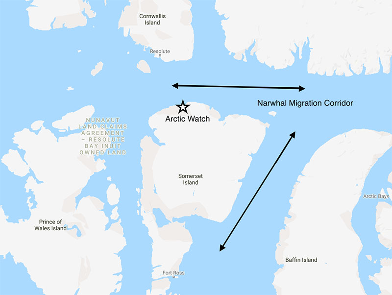 Arctic Watch is on the August Narwhal migration corridor